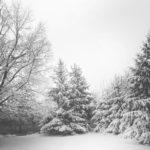 Winter Tree Preparation