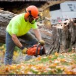 Tips For Hiring the Right Tree Professional