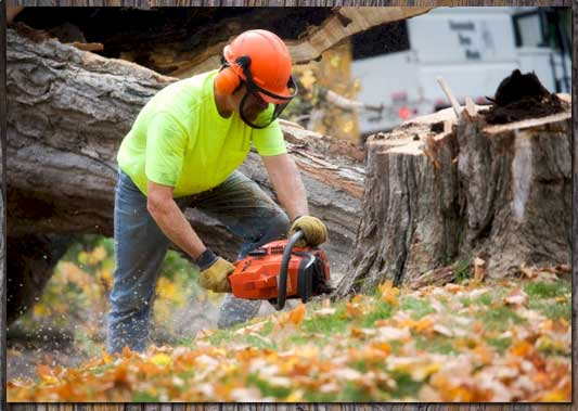 Tree Service Company serving Oakland County, Michigan